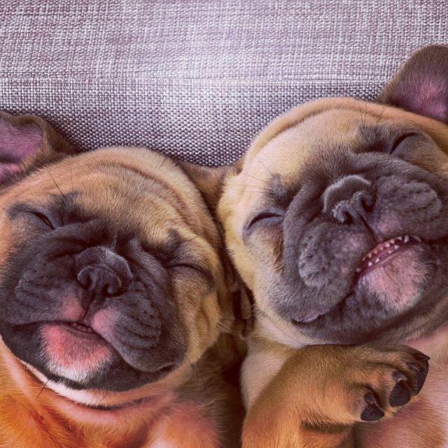 🐾 Pug Life. · · #besties #pugsworld #puglove #twins #naptime #happyfriday #dogsofinstagram #snuggle #dogoftheday #bestfriends #mustlovedogs #pugsofinsta #beseen #cutedogsonly #spotlitepets #pugsofig #worldofpugs #pug_feature