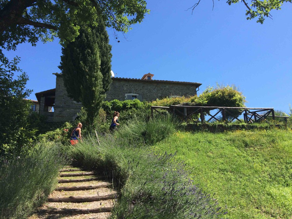 Calcina steps trainers walking up.jpg