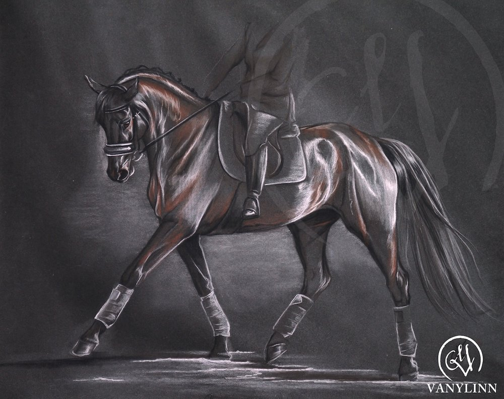 Warris dressage horse pastel sketch light.JPG