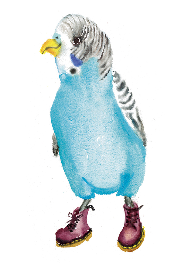 Rosie Webb's illustrations - Dr Budgie