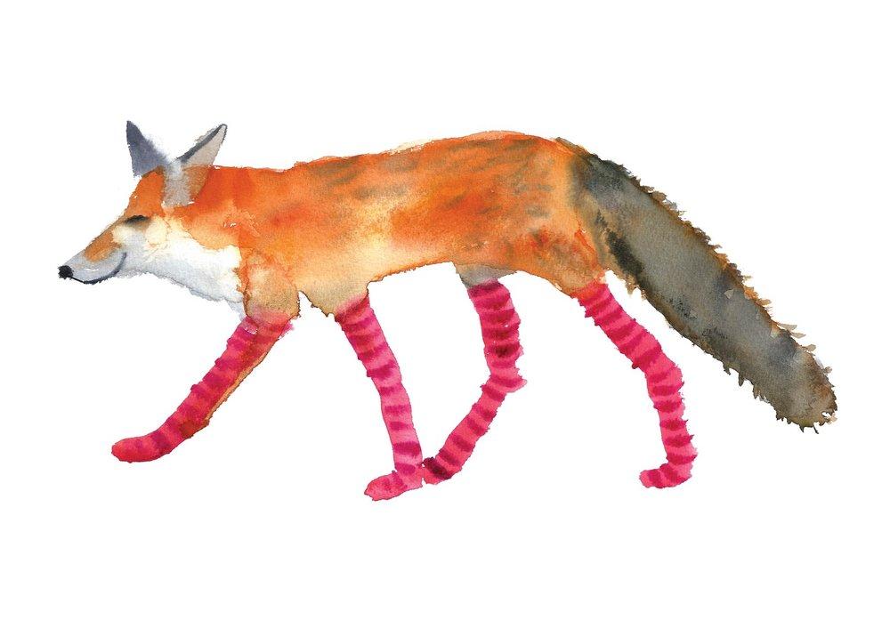 Rosie Webb's illustrations - Fox in Socks