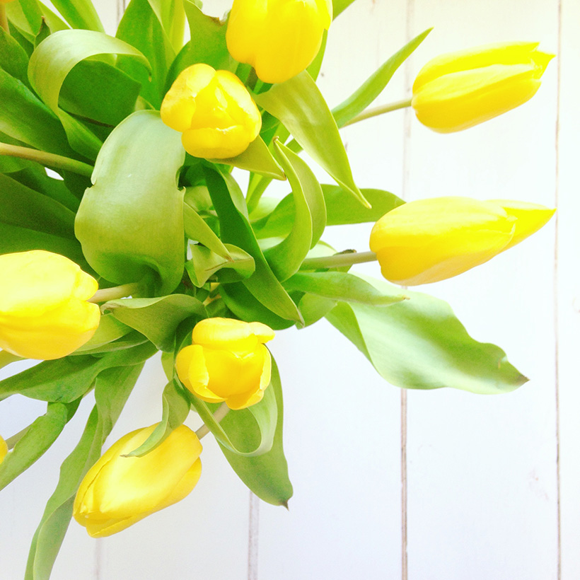 tulips by Adventures & Tea Parties