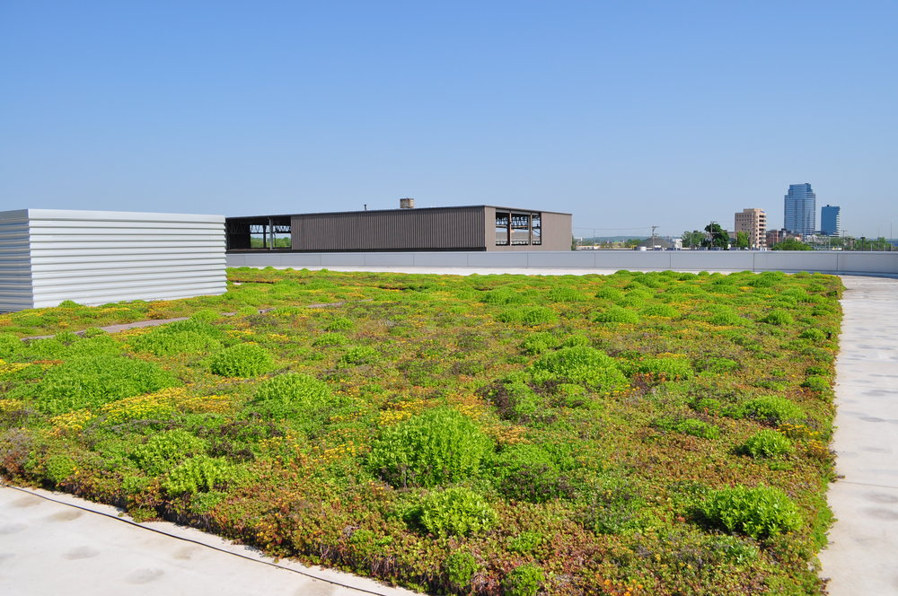 The Green Roof on top of the Rapid Operation Center, the garage and maintenance facility for Grand Rapids' bus system. Courtesy of Elaine Isely.