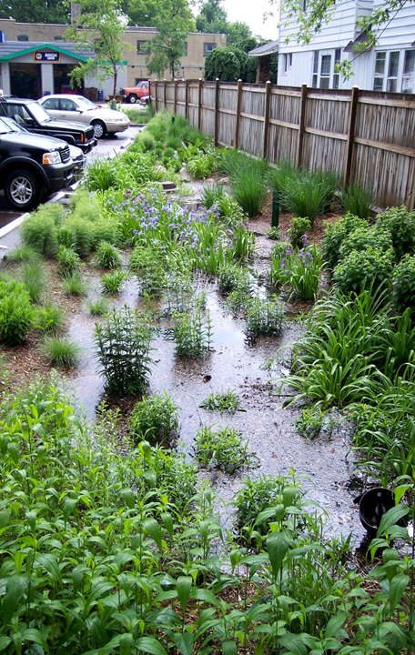 The West Michigan Environmental Action Council's rain garden at the back edge of their property. Courtesy of Elaine Isely.