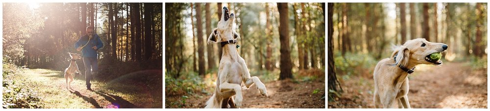 a saluki running and jumping to catch a ball in the woods