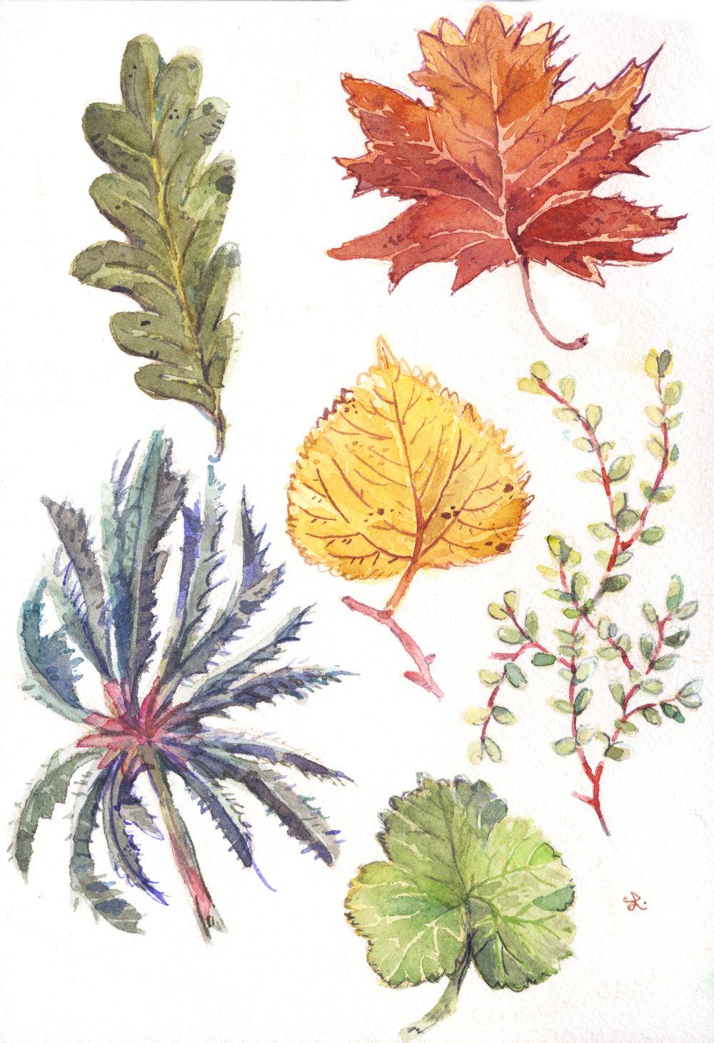 hojas botánicas 1 .jpg