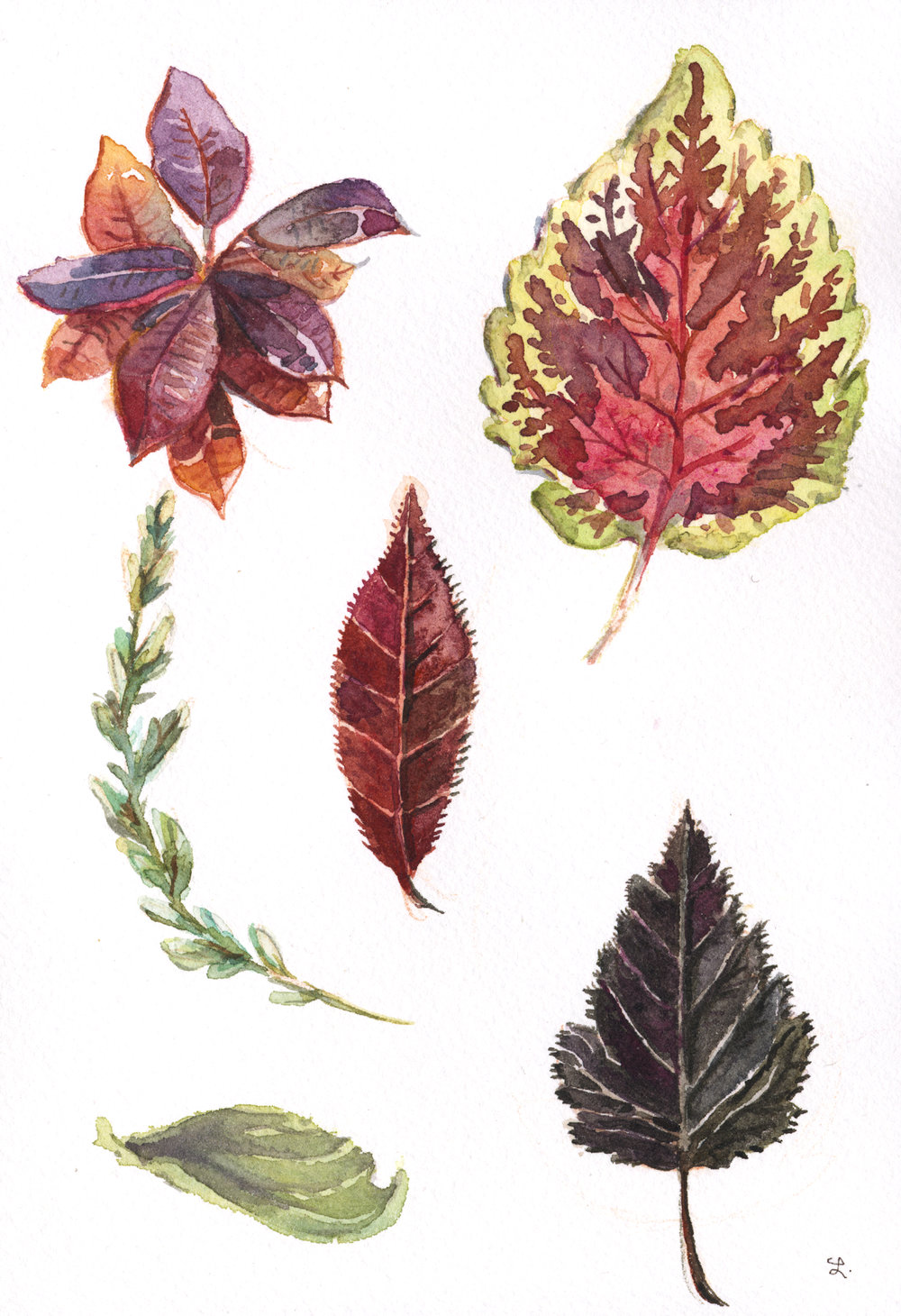 hojas botánicas 3 .jpg