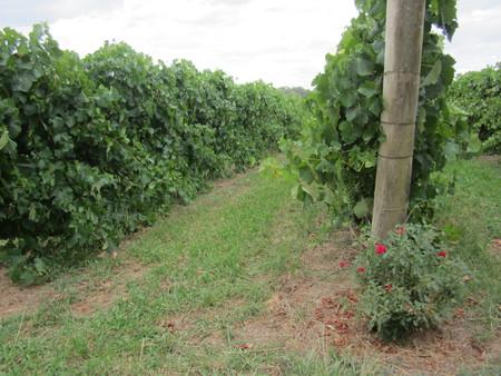 smith-winery.jpg