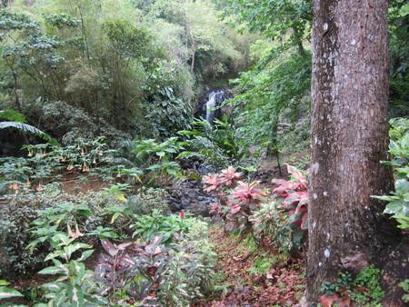 Bob-Desautels-Locavores-Digest-Grenada-4.jpg