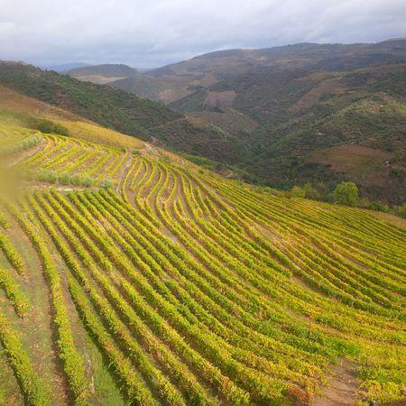 Bob-Desautels-Locavores-Digest-Douro-Valley-1.jpg
