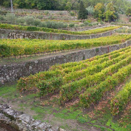Bob-Desautels-Locavores-Digest-Douro-Valley-2.jpg