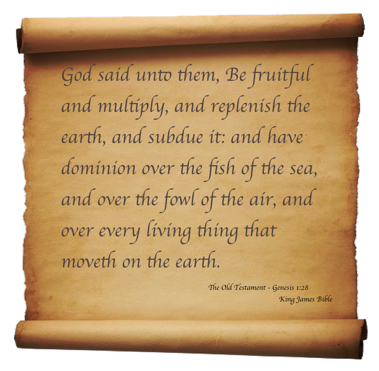 Genesis Verse Bobs Blog_Sept7.png