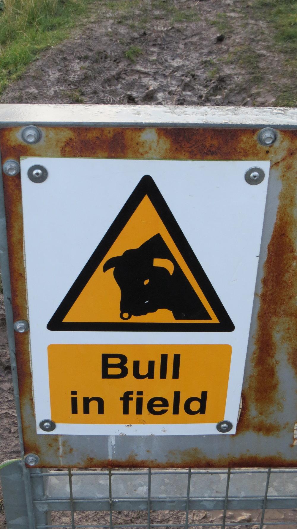 Beware bull