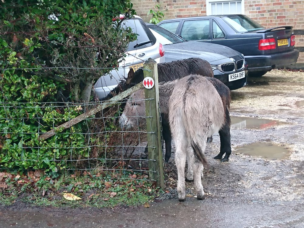 Bedraggled Donkeys