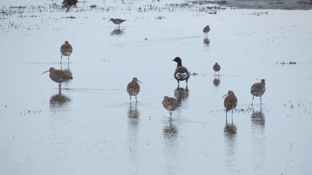 Birds Wading
