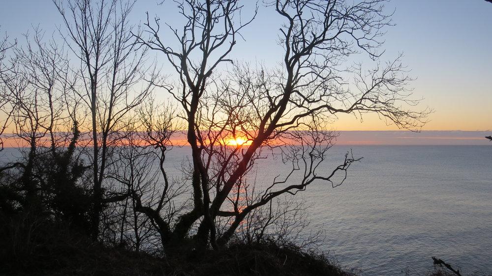 Sunrise through Tree