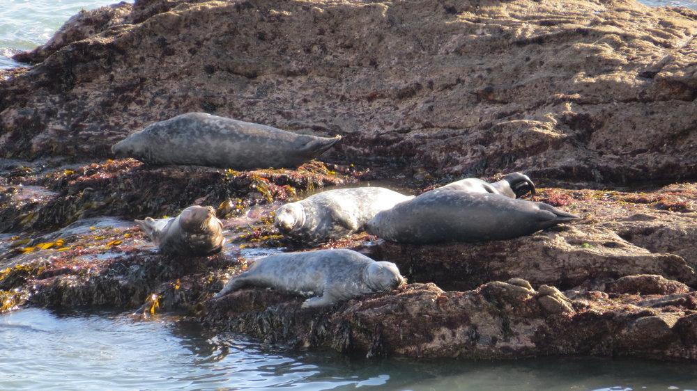 Seals Lazing