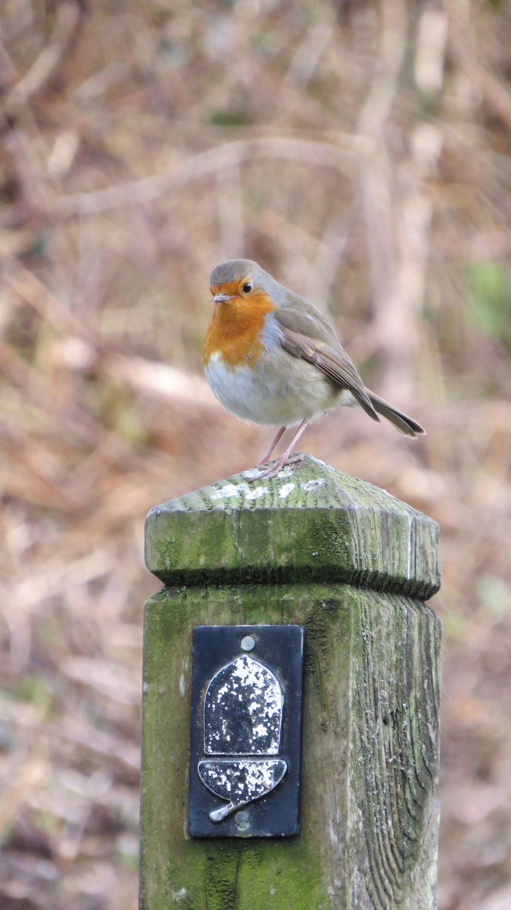 Robin on Waymarker