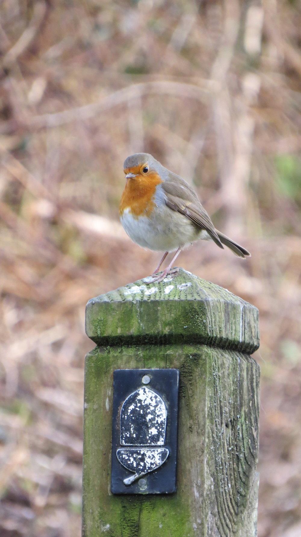 Robin on Waymarker