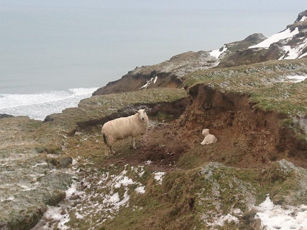 Clifftop Lamb