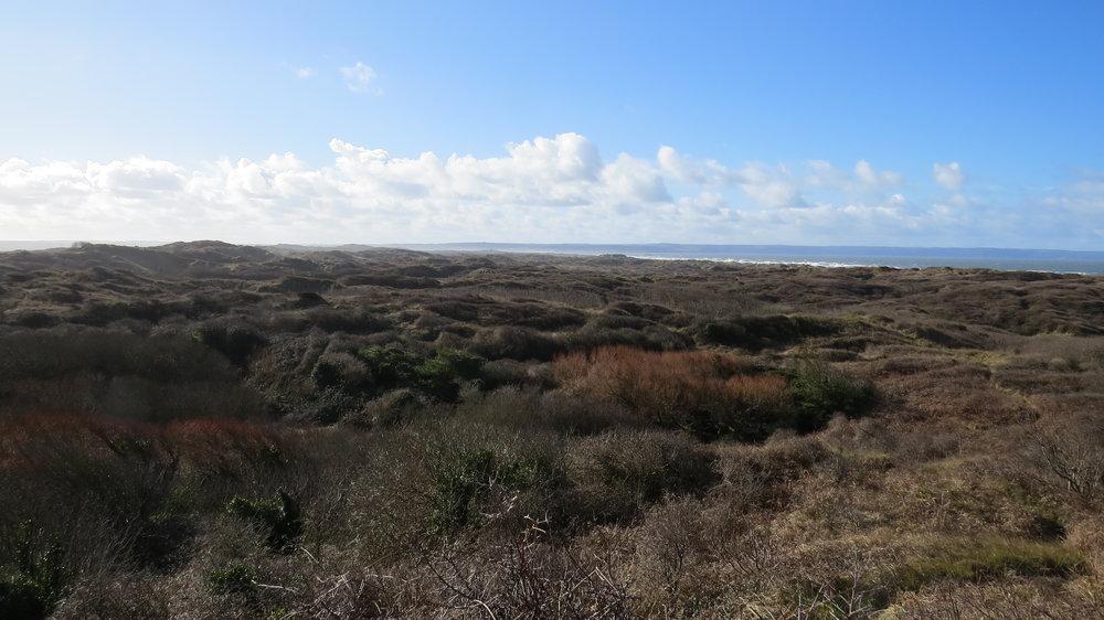 Saunton Dunes