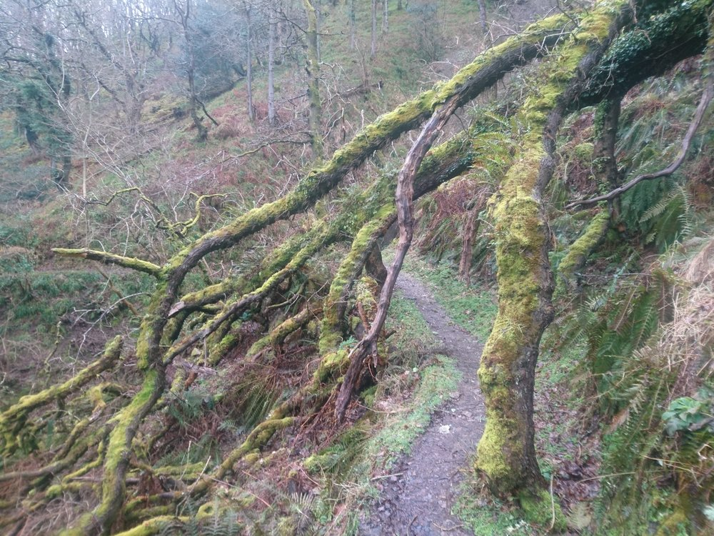 Tree Root Arch
