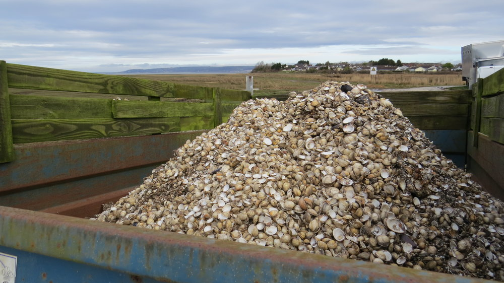 Truck Filled with Shells