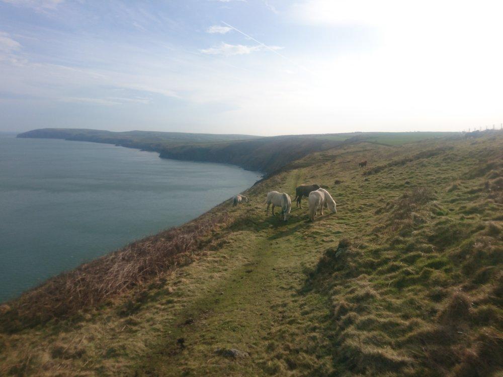 Ponies on Path