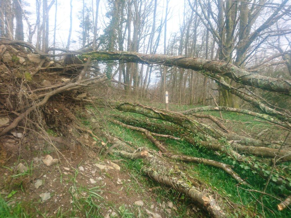 Tree Blockade