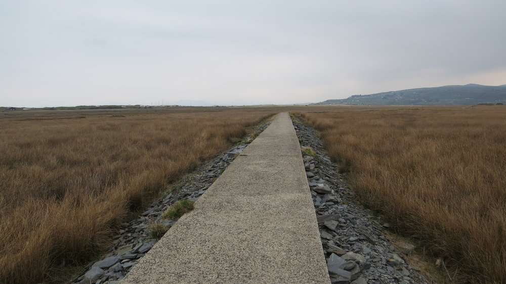 Raised Path near Shell Island