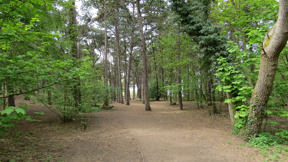 Formby Wood
