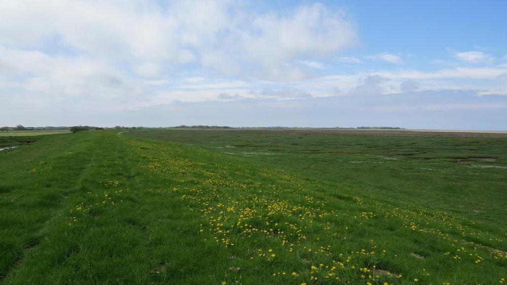 Cockerham Marsh
