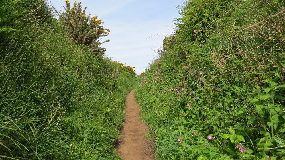Flowery Paths