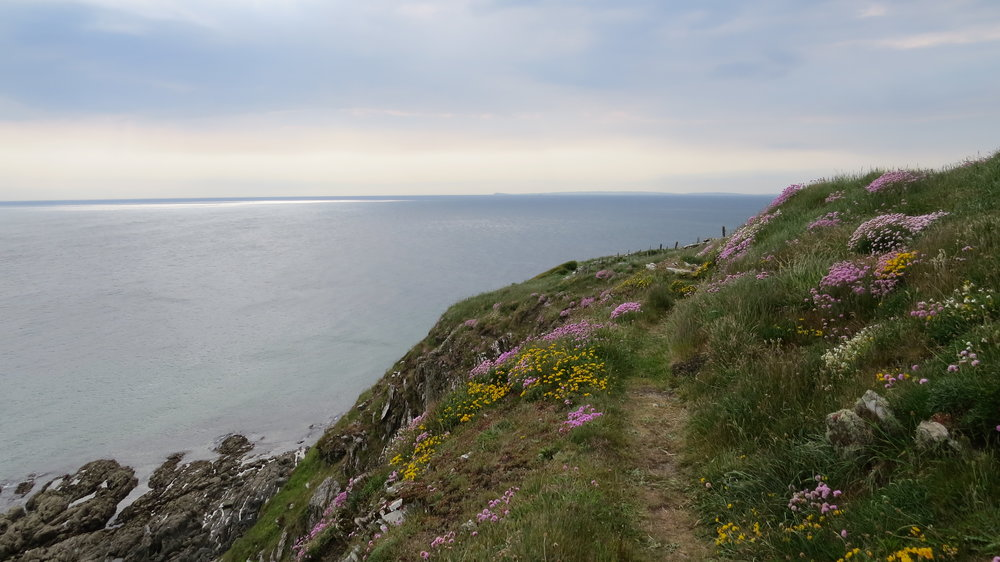 Clifftop Flora