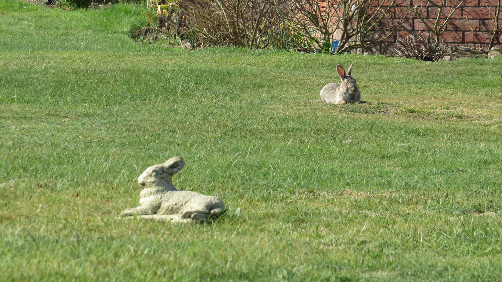 Rabbit Statue & Real Rabbit