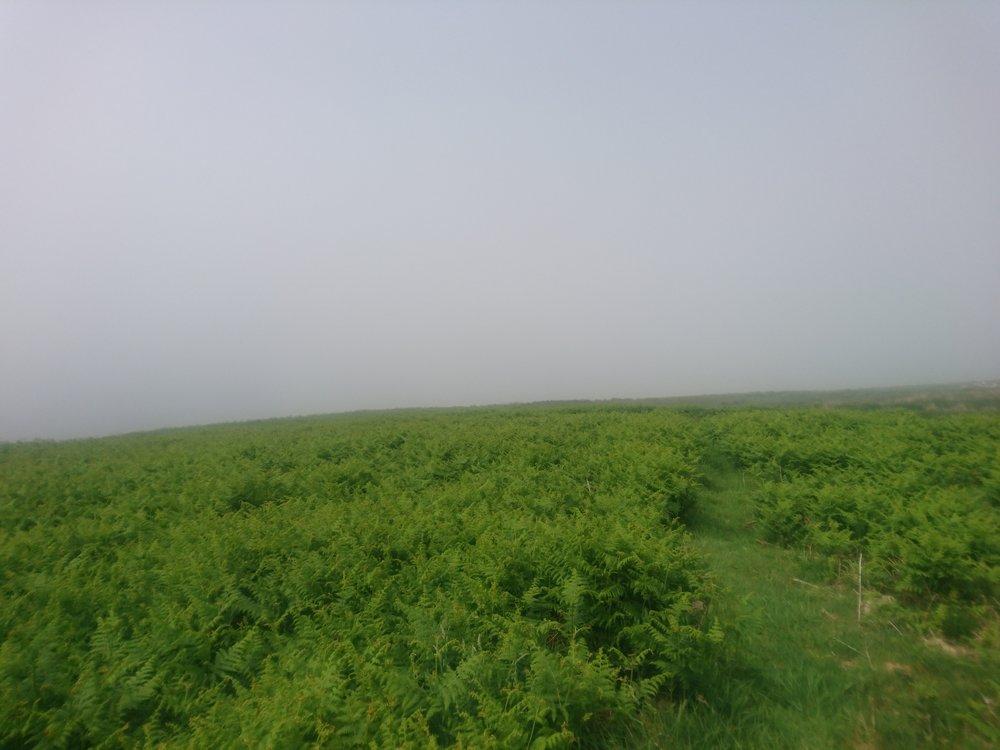 Path through the Fern