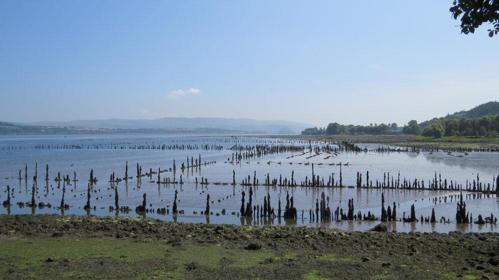 Timber Ponds