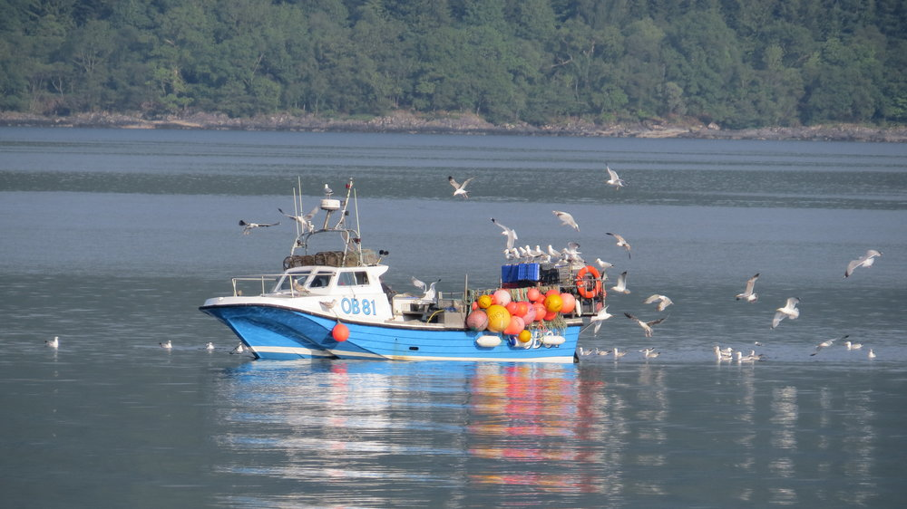 Fishing Boat and Gulls