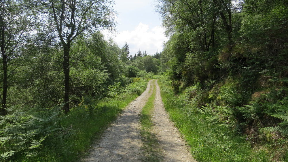 Cowal Way Forest Track