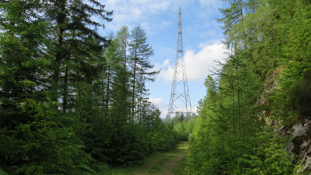 Pylon in the Woods