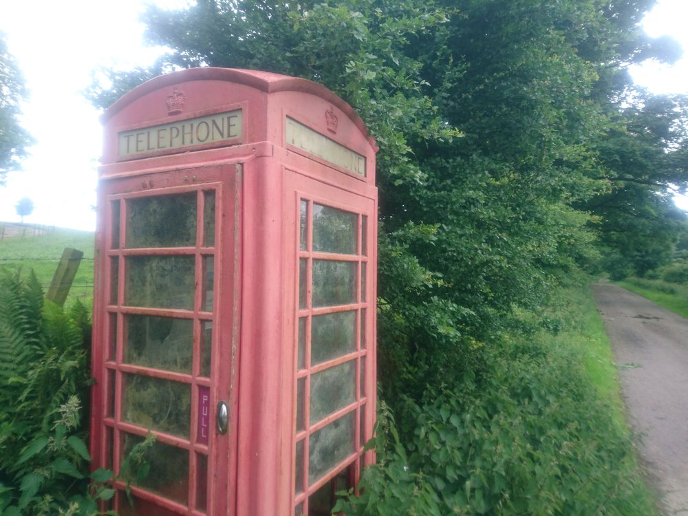 Phonebox in the Undergrowth