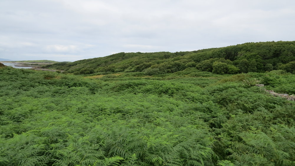 Bloody Bracken Everywhere