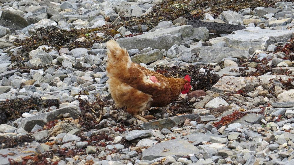 Chicken on the Rocks