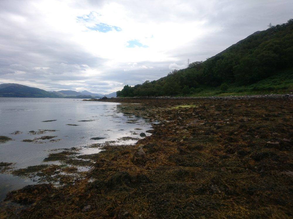 Seaweed covered Beach