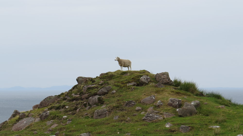 Ewe are the King of the Mountain