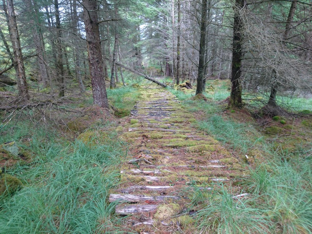 Timber Track II