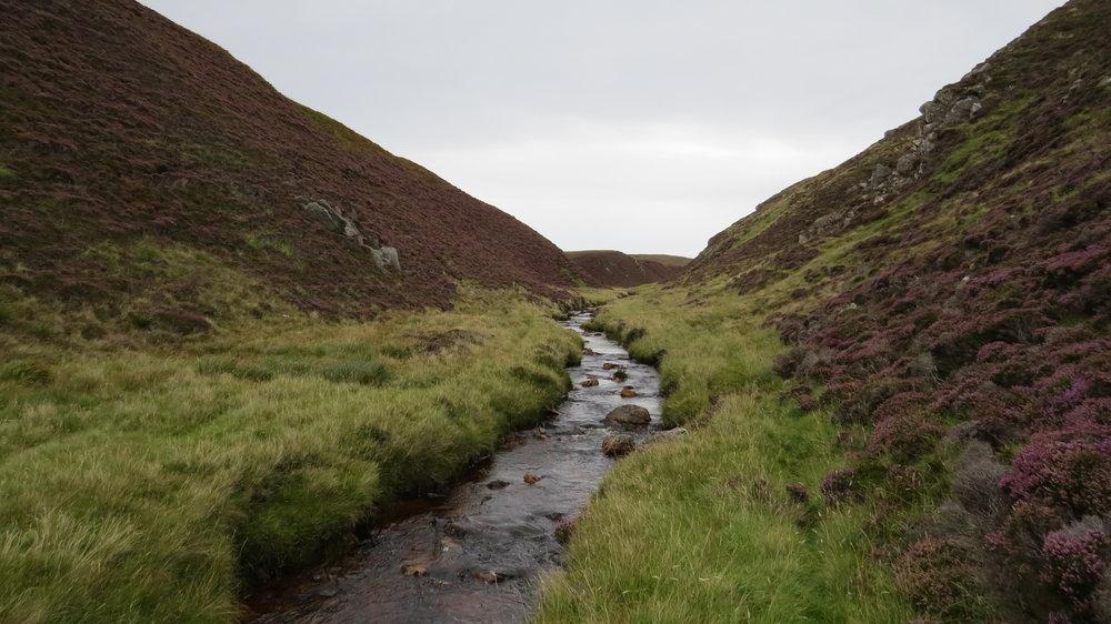Following Deer Track along River