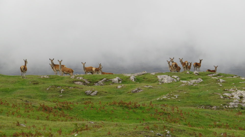 Group of Hinds
