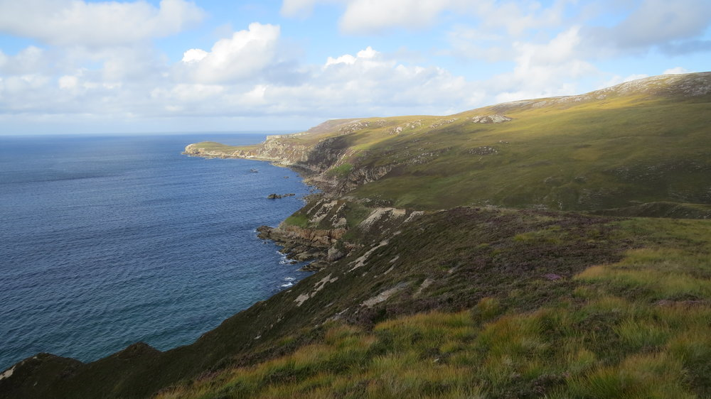 Path towards Whiten Head