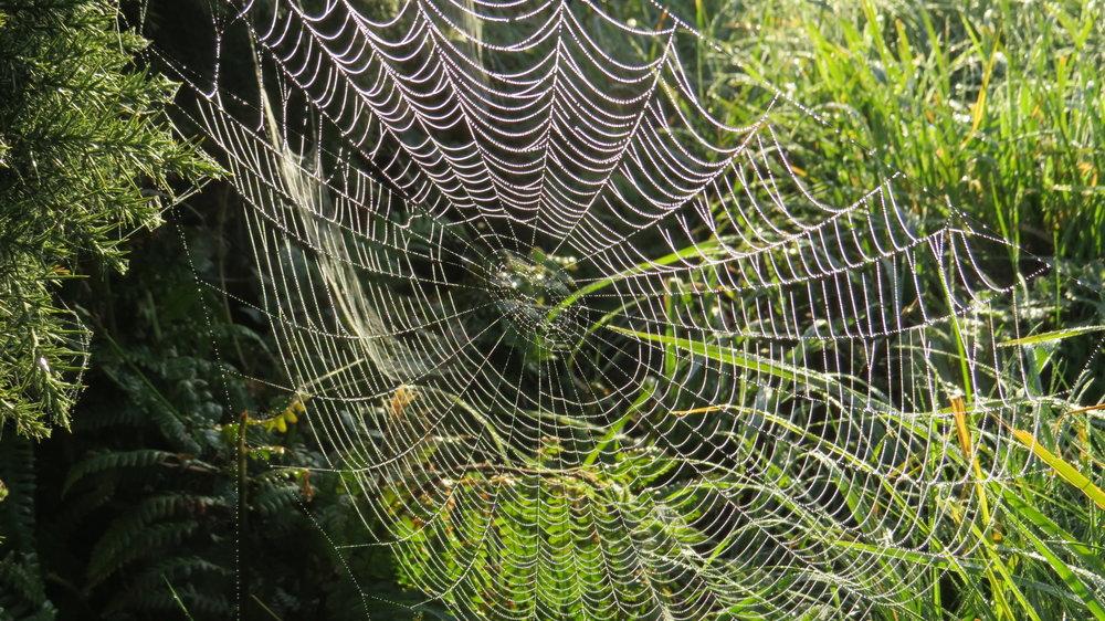 Dewy Spider's Web
